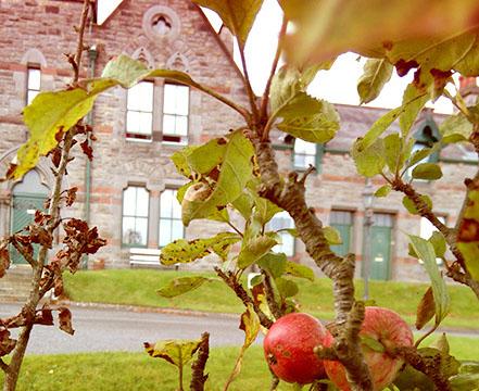 dungannon_apples-crop-u133365