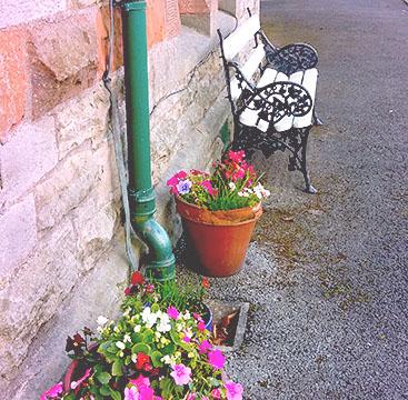 dungannon_flowers-crop-u133590
